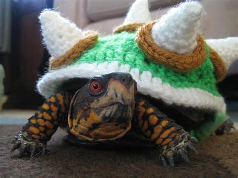 turtle sweaters bowser sweater for a turtle