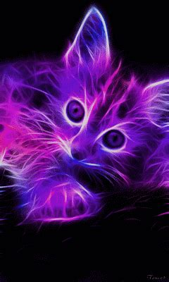 Cool Car Wallpapers For Desktop 3d Animal by Cat Gif Find On Giphy