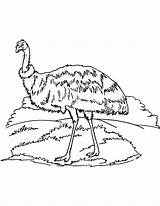 Emu Coloring Australian Pages sketch template