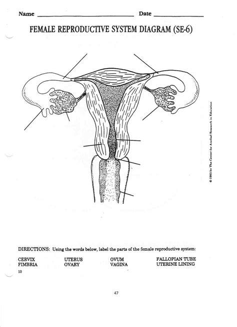 Diagrams Of Female Reproductive System  Printable Diagram