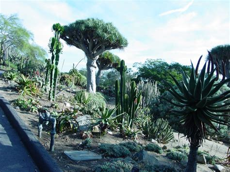 botanical gardens encinitas pictures of gardens with succulent plants on line