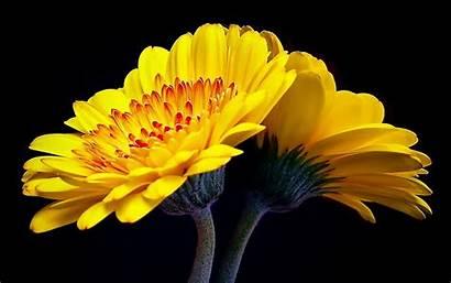 Yellow Laptop Flowers Pixels 1920 1200