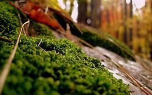 Beautiful Mac Nature wallpaper