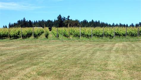 woodinville northwest planning wine trip tips country drink food featured