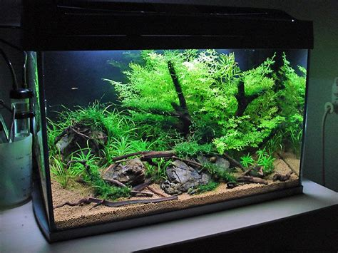 How To Set Up An Aquascape by Fantastic Step By Step Planted Aquarium Set Up Tutorial