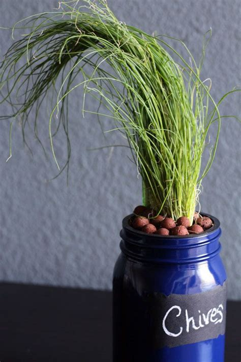 chives diy hydroponic mason jar herb garden kit