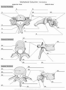 Anatomy Practice Worksheets