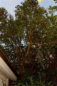 Flieder Schneiden Video : schneiden von flieder akazie und lorbeer pflegen schneiden veredeln green24 hilfe ~ Orissabook.com Haus und Dekorationen