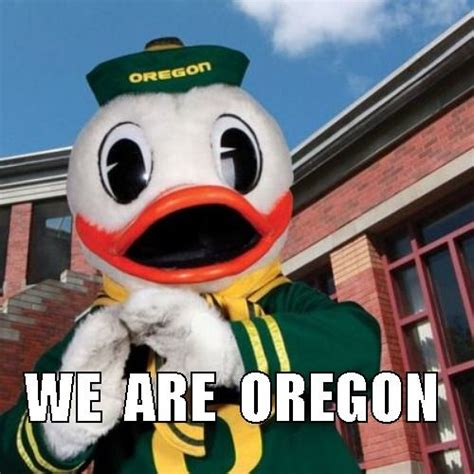 Oregon Ducks Meme - 330 best love my ducks images on pinterest