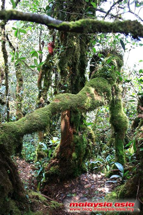 Mossy Forest In Cameron Highlands Malaysia Asia Travel Blog