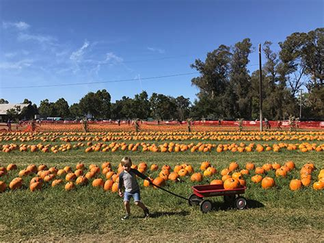 Riverwoods Flooring Fort Wayne In by 100 Clayton Valley Pumpkin Farm 2017 Pumpkin