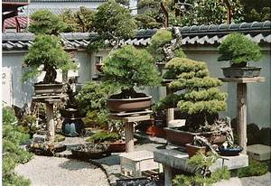 bonsai gakko en With garten planen mit bonsai 1 jahr