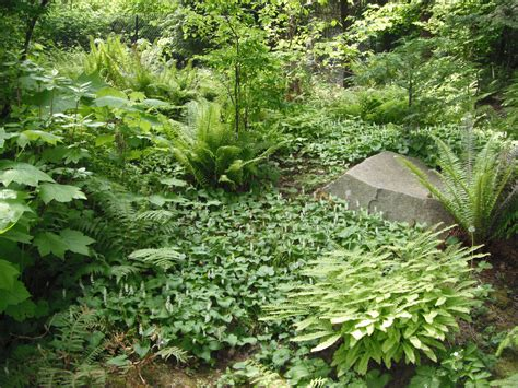 plants of the northwest native plants pnw an encyclopedia of the cultural and natural history of northwest native plants