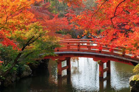 autumn leaves japan national tourism organization