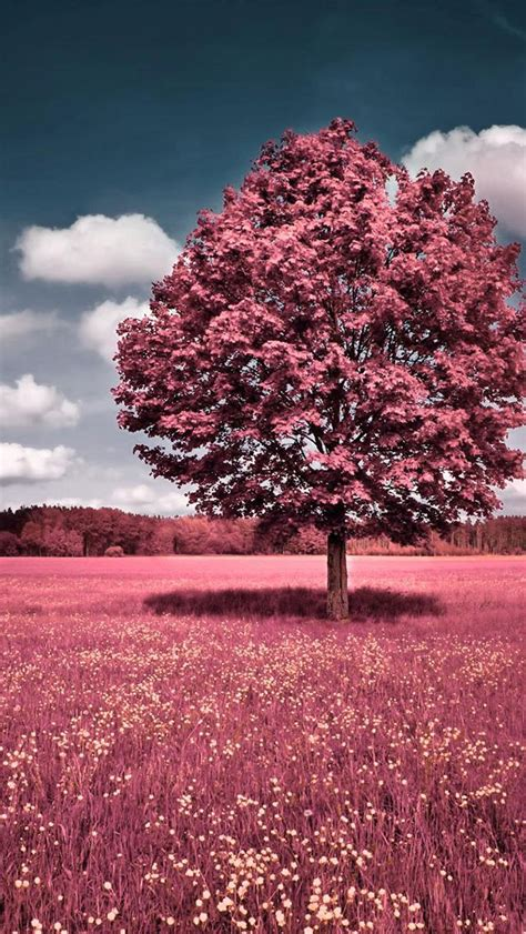 Beautiful Tree Phone Wallpaper by 70 Iphone Wallpaper Free To The Wow Style