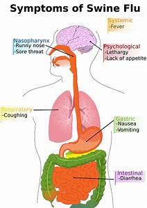 Swine Flu  H1n1   Symptoms And Precautions