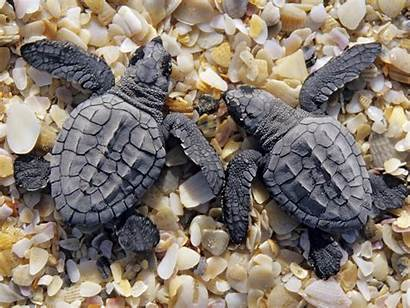 Turtles Desktop Widescreen 1freewallpapers