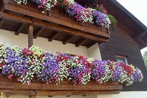 Blumen Für Den Balkon : balkonblumen blumen kefer ~ Lizthompson.info Haus und Dekorationen