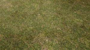 Natural Grass Texture Floor At Skyrim Nexus Mods And