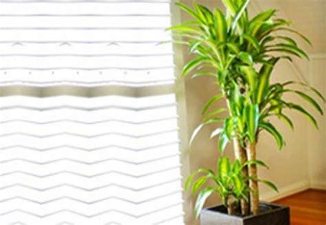 plante de bureau feng shui plante semnificative in feng shui