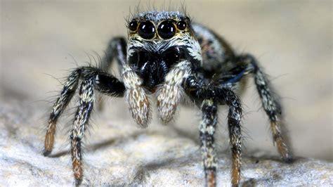 Spinnen Heimische Spinnenarten  Spinnen  Insekten Und