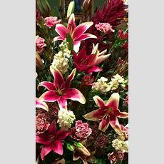 Sonata African Lady Lilies  Flowers  Pretty Flowers