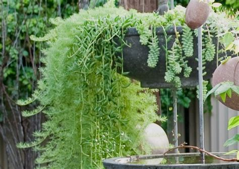 Watering Vertical Gardens by Watering Vertical Gardens Lush Living Walls