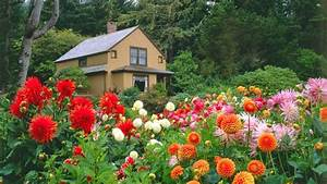 Garden Hd Images Free Download Flower Wallpaper The ...