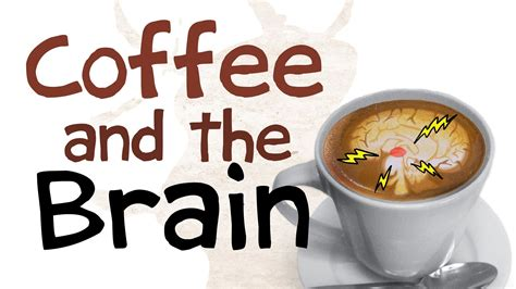 How Coffee Affects Your Brain Jura Coffee Machines New York Machine Netherlands Arabica Abu Dhabi Corniche Yellow Thailand Environment Zeist Canada
