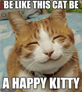 The Gallery For Gt Really Happy Cat Meme