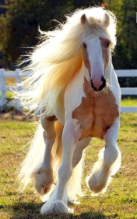 beautiful horse breeds   fun