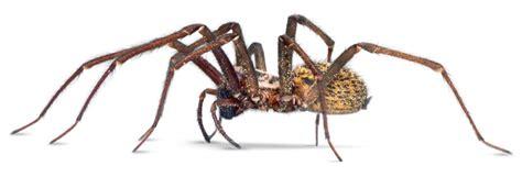 types  spiders spider facts  kids dk find