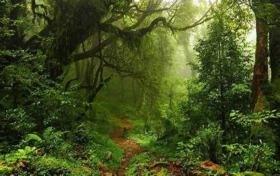 Rainforest Forest Jungle Trees Nature Ferns Path