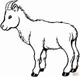Coloring Goat Pages Printable Drawing sketch template