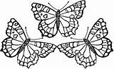Coloring Pages Butterfly Monarch Brown Shark Bear sketch template
