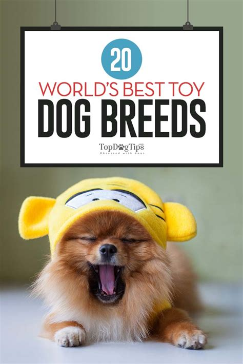 dogs that shed the most list 100 active breeds that 100 images breeds