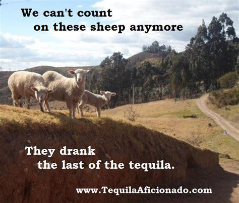 Sheep Memes - sunday fun news tequila aficionado