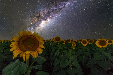 Sunflowers Australia Night Sky Stars Space Galaxy