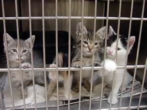 animal shelter reform bill passes fl senate committee