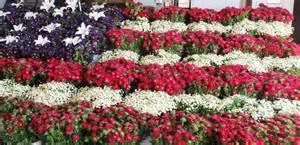 Fresh Flower Wholesaler Photo