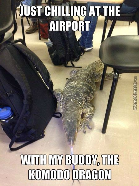 Dragon Memes - komodo dragon memes best collection of funny komodo dragon pictures