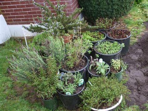 Container Herb Garden  Flickr  Photo Sharing