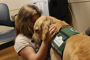 Therapy Dog at Cincinnati Children's Works with Doctor ...