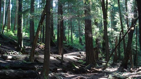 buntzen lake trails