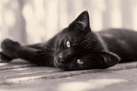 8 Hairraising Facts About Black Cats  Mental Floss