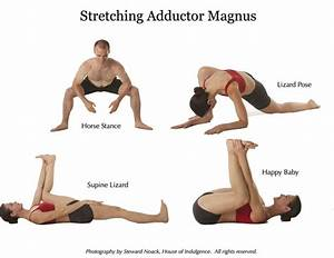 Great Muscles to Know: The Adductor Magnus - Anatomy ...