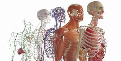 Software Tomografia Computerizzata Medical Bodymap Anatomy Logiciel