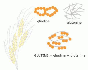 in quali alimenti si trova il glutine cos 232 il glutine in quali alimenti si trova e a cosa serve