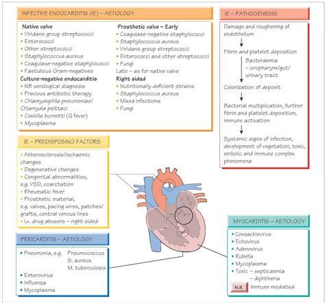 endocarditis myocarditis  pericarditis systemic