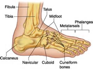 Icd 9 Code For Foot Fracture Midfoot Cuboid Cuneiform Navicular Medical